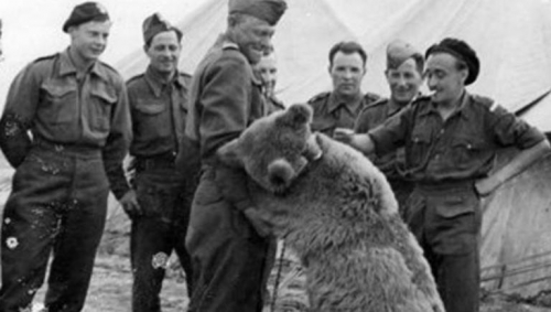 355739-wojtek-the-soldier-bear-picture-given-by-wojtek-memorial-trust.jpg